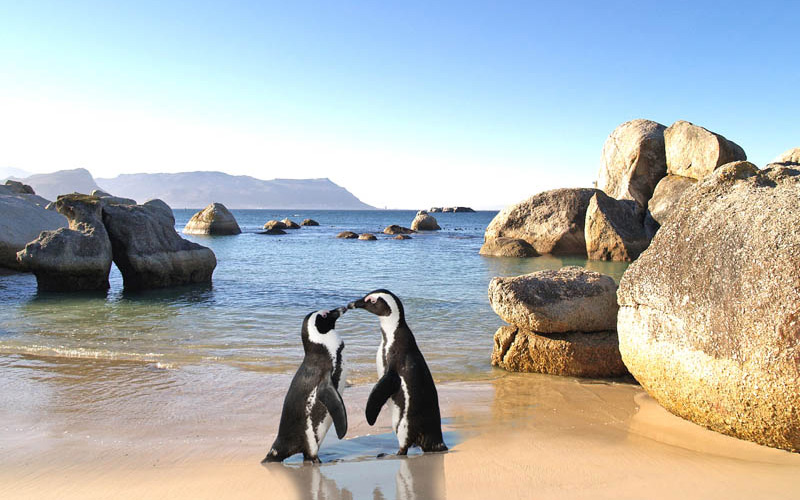 Image result for boulders beach 800 x 500
